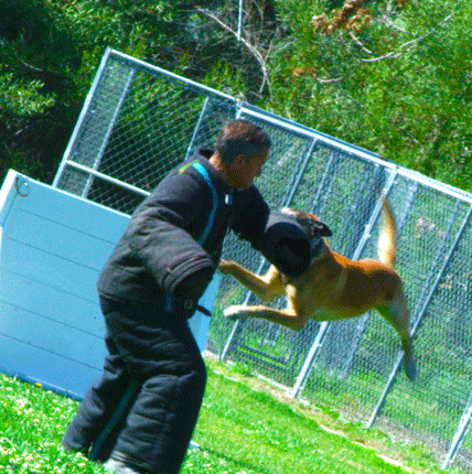 K9 Action